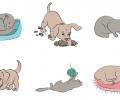 Rehabilitation Lesson Kit #6: Cats & Dogs