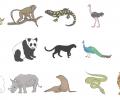 Rehabilitation Lesson Kit 11: The Zoo